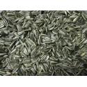 Graines de tournesol strié 20 kg